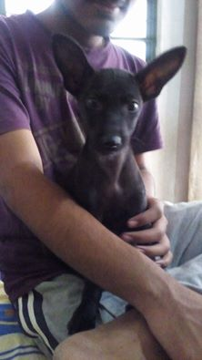 smita-ray-adoption-4-dec-2016